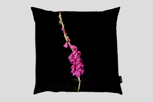 Foxglove (black background)
